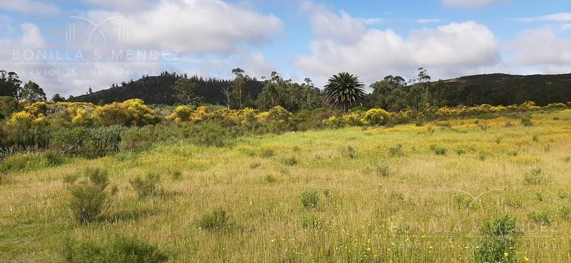 campo - piriápolis