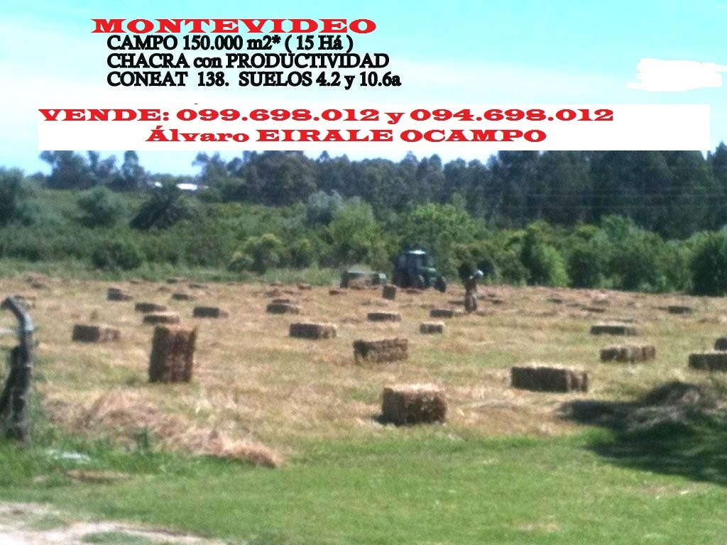 campo productivo (15 há)150.000 m2  montevideo rural