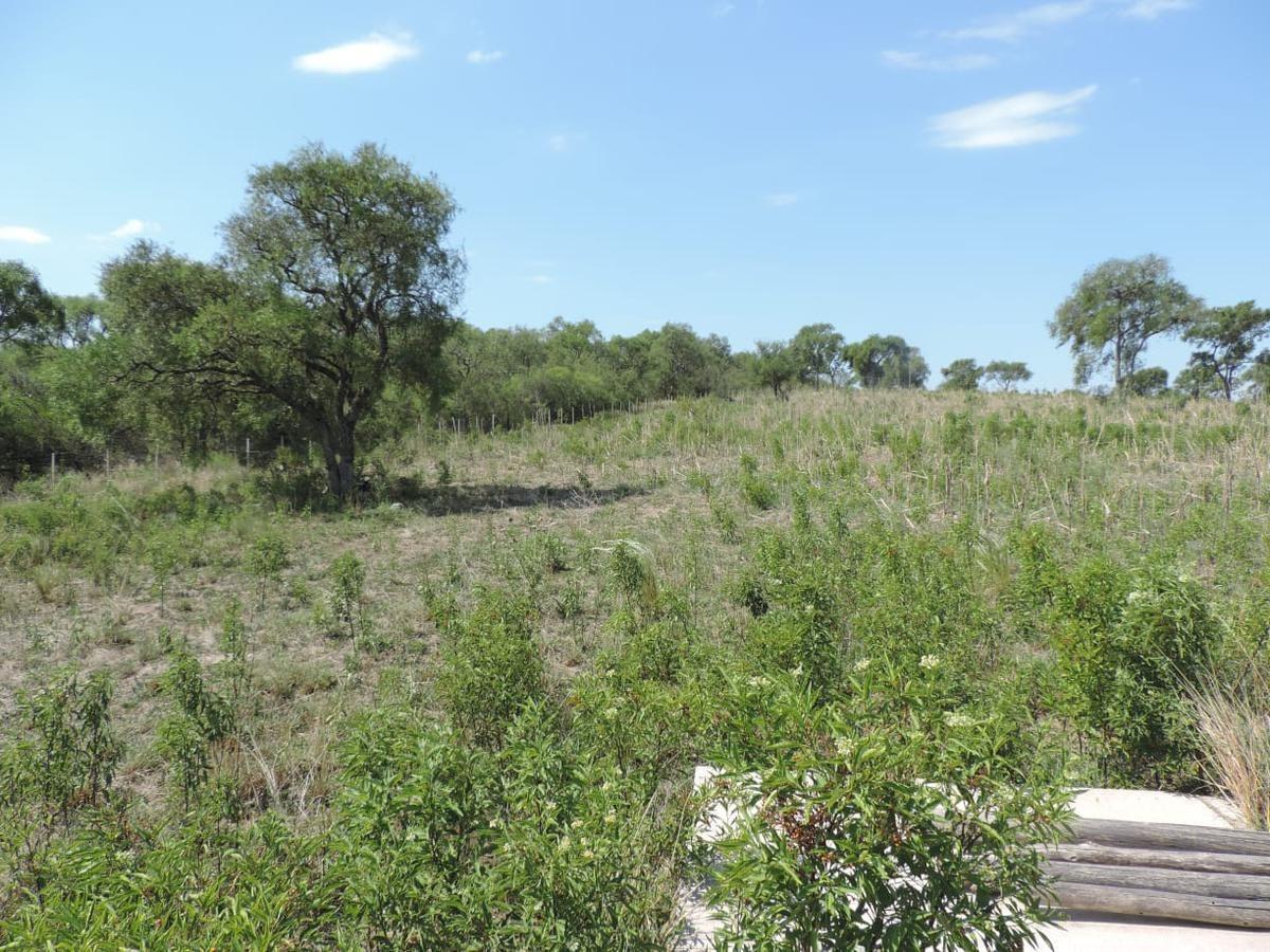 campo - rio seco