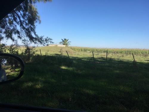 campo ruta 11 - km 57 (110 hect.) arditti