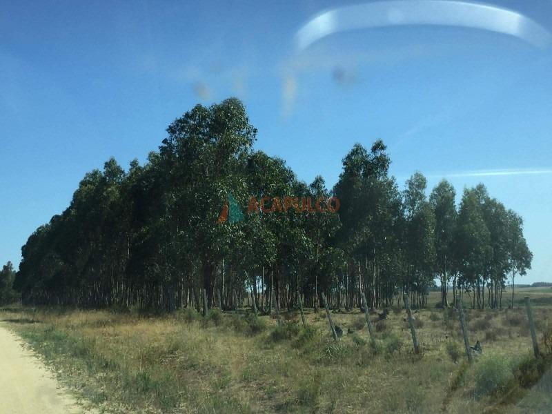 campo ruta 9 san carlos- ref: 3579