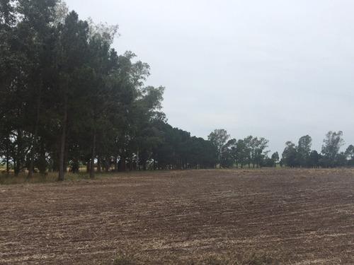 campo sobre ruta nacional n° 8