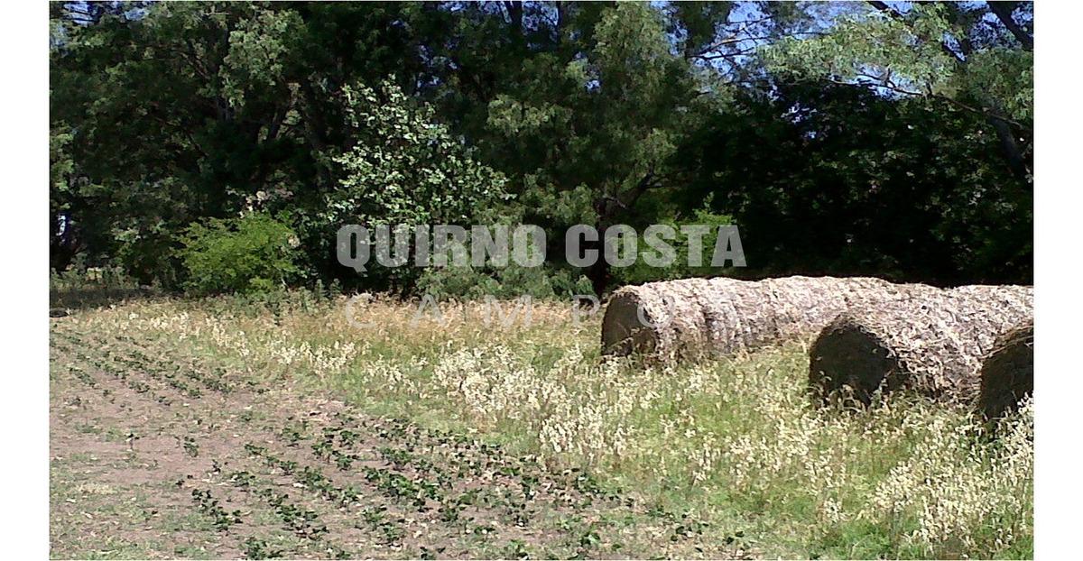 campo venta saladillo agricola 21 hectareas chacra