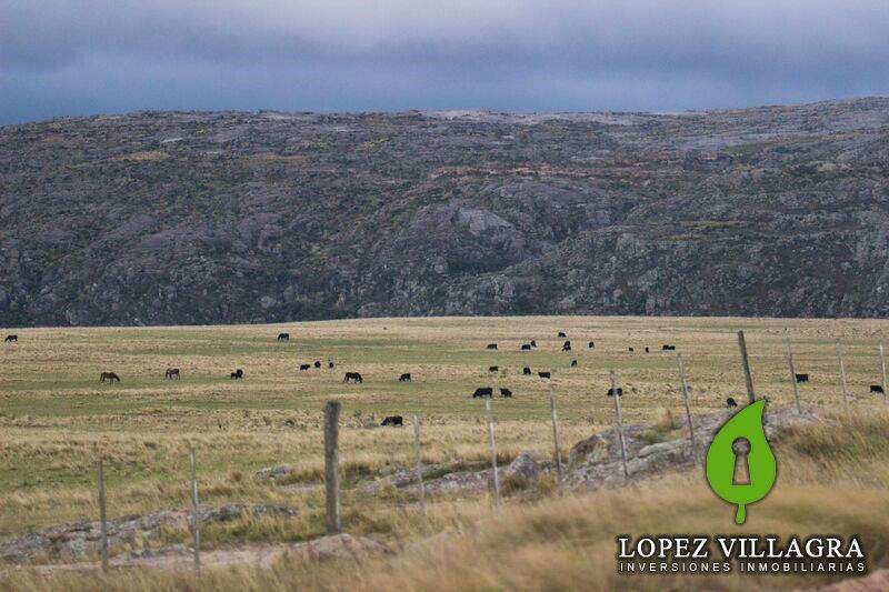 campo vta. 180 ha. con rancho y costa de rio en los gigantes