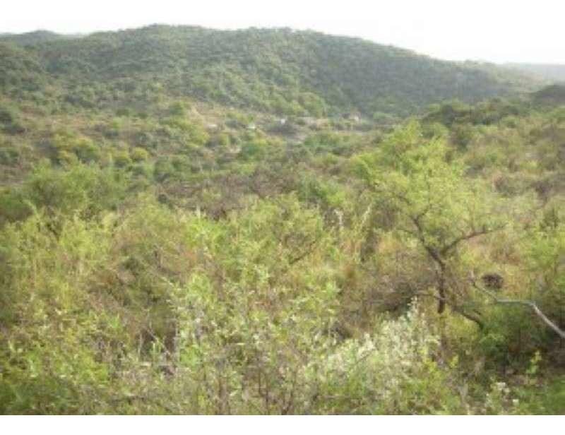 campo/fracción en venta en la paisanita