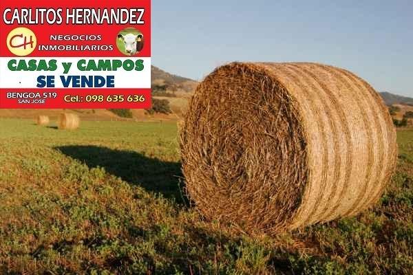 campos arrendar venta ganadero agricola tambo forestal mixto