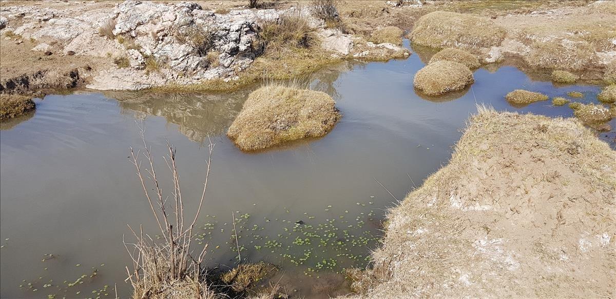 campos en pozo la pampa (panaholma)