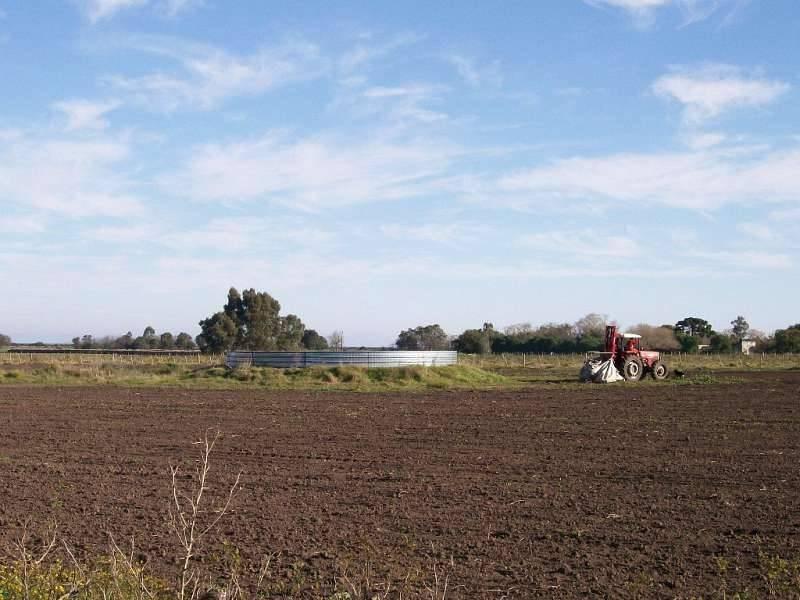 campos o chacras alquiler colonia