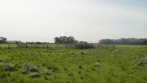 campos o chacras venta brandsen