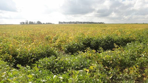 campos o chacras venta carlos tejedor