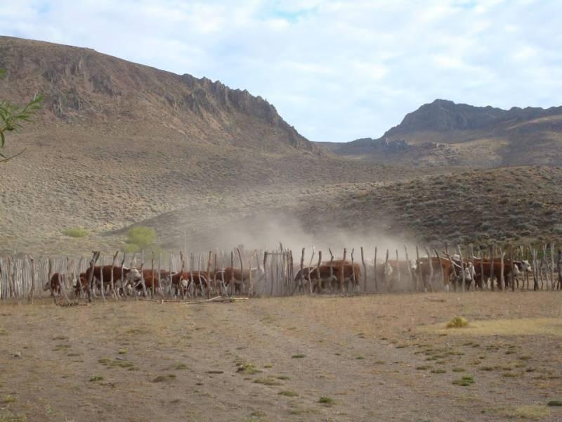 campos o chacras venta cushamen