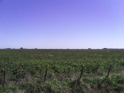 campos o chacras venta daireaux