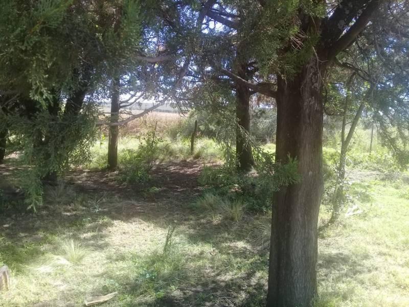 campos o chacras venta panaholma