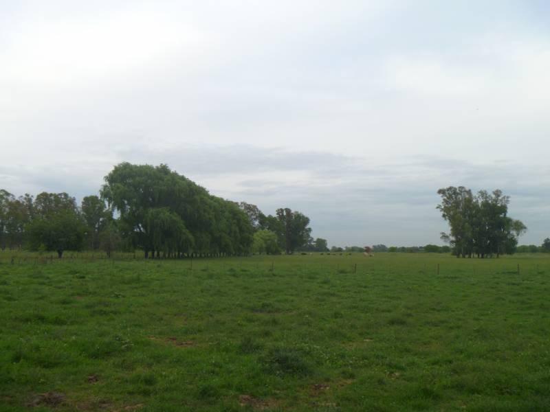 campos o chacras venta pilar