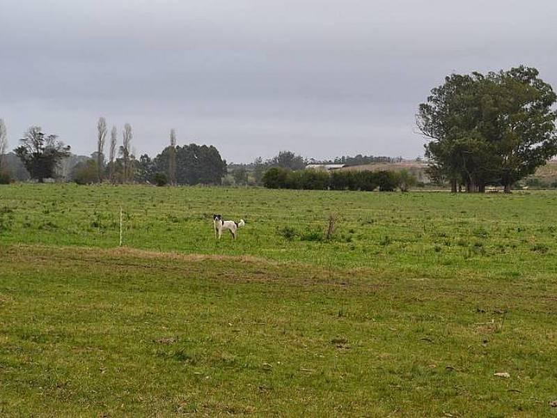 campos o chacras venta punta del este