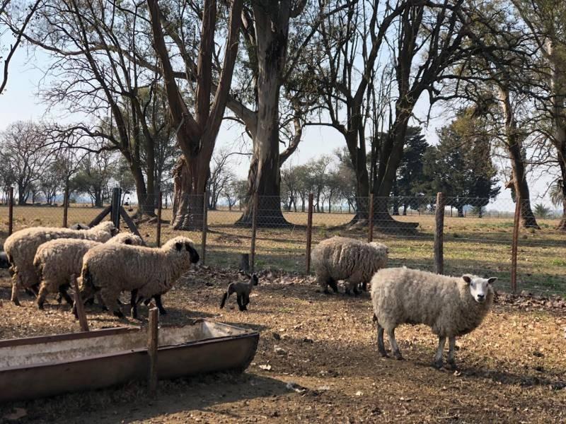 campos o chacras venta san pedro