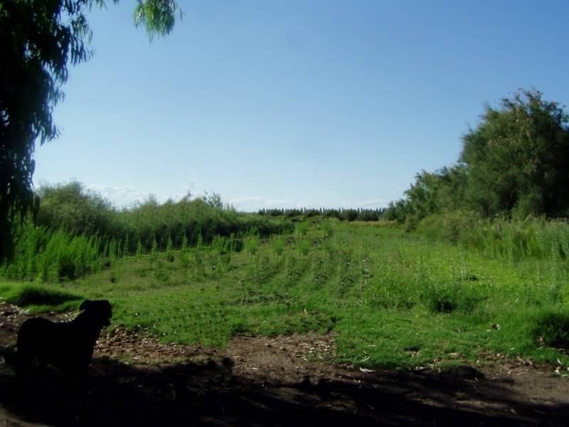 campos o chacras venta san rafael
