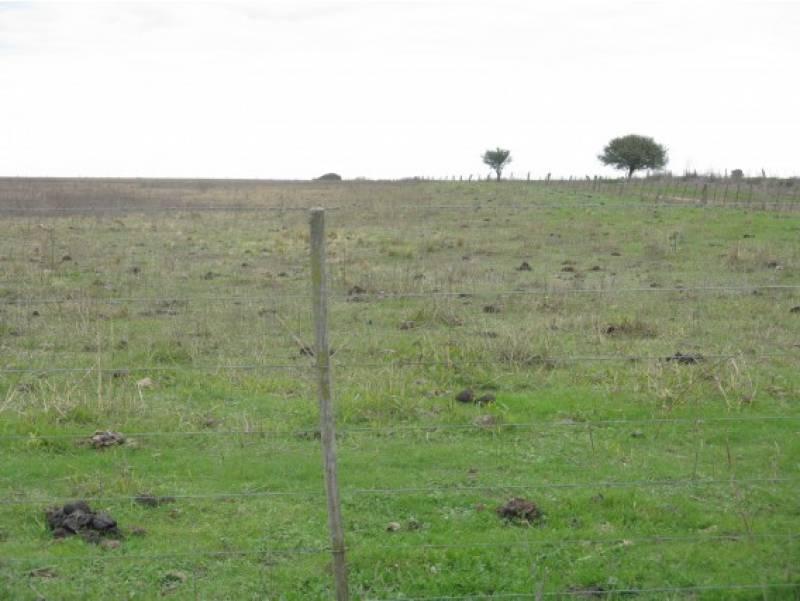 campos o chacras venta winifreda