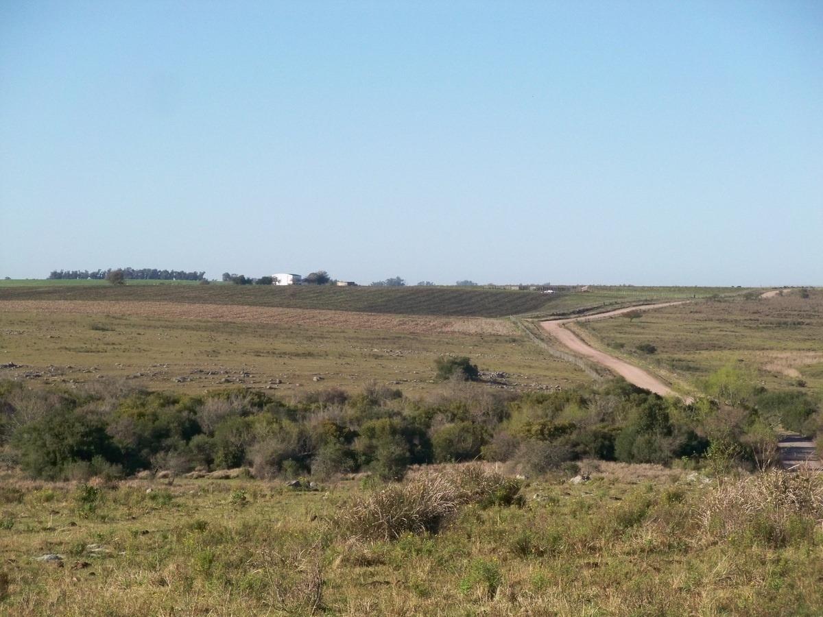 campos venta 325 has ganaderas con casco e instalaciones