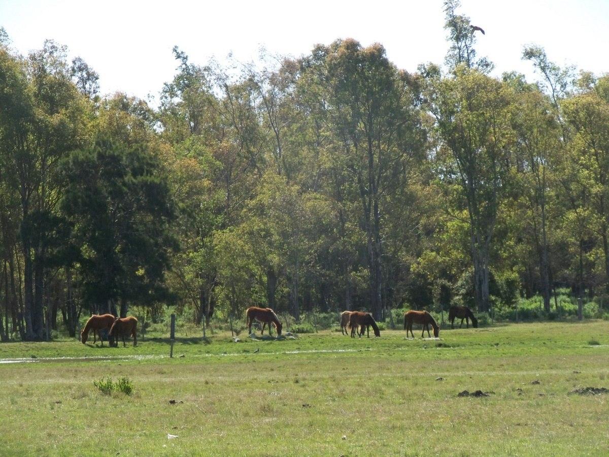 campos venta flores 732 has ganaderas, forestales, agrícolas