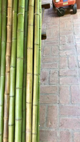 caña bambú tacuara