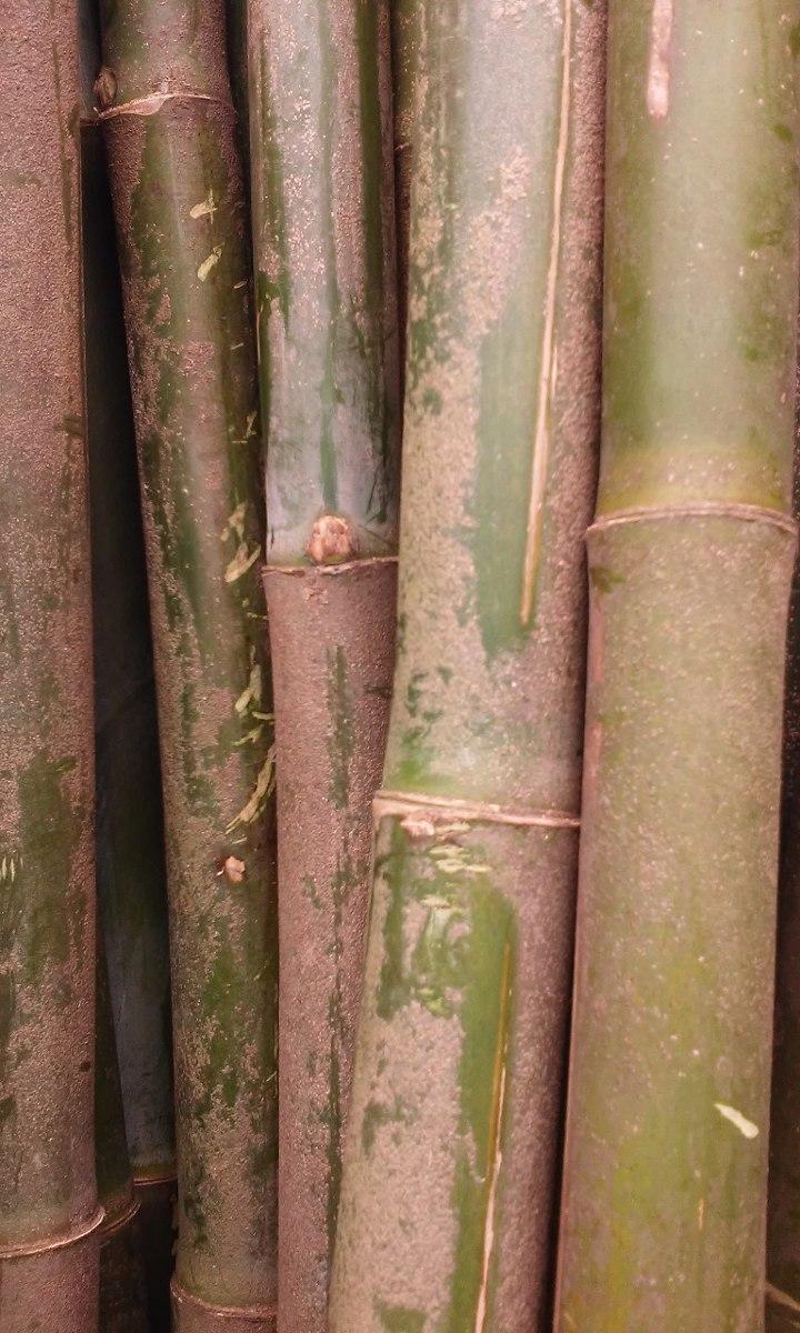 Ca A De Bambu Tacuara Gruesas Y Finas En Escobar 100 00 En  ~ Cañas De Bambu Verdes Para Decorar