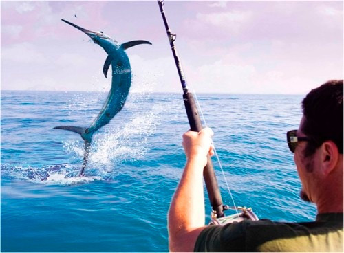 caña de pescar de 3.5 metros, plegable a 67cm + carrete