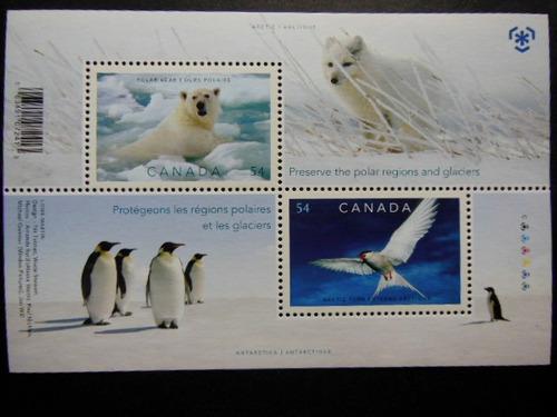 canadá artico ursos antártica pinguin aves gelo preservação