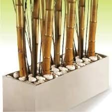 Canas De Bambu Para Decoracion Naddeos Il Mercato 6500 En - Decoracion-bambu