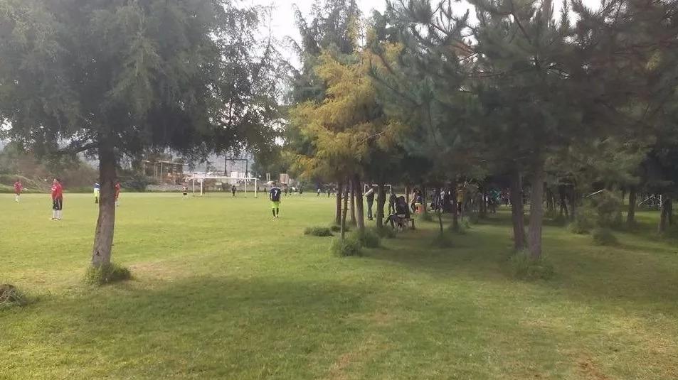 canchas de fútbol soccer profesional, pasto natural