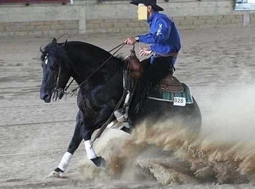 Caneleira Faixa Elastica Adesiva Cavalo 10 Cm Cx 18 Unid - R  299 77d7205fbedb8