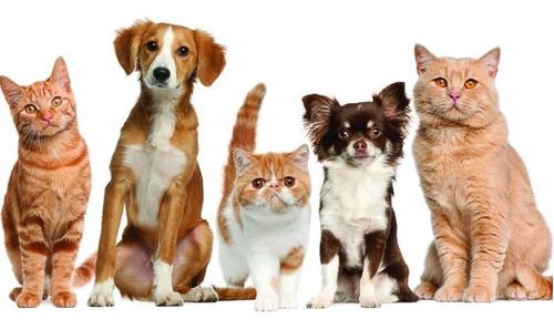 caneo toalla mascotas super absorbente, perros districrisatv