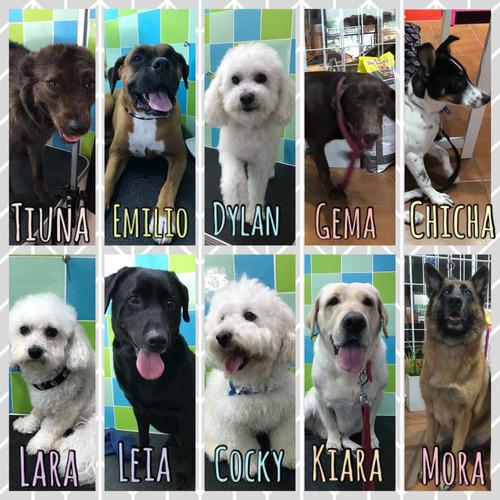 canina mascotas peluquería