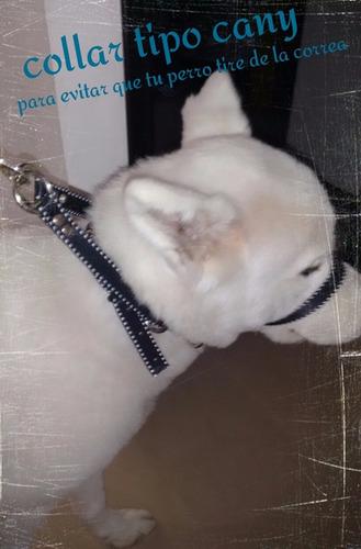 canny collar para perros que jalan mucho