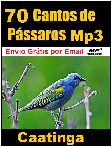 NAMBU BAIXAR CANTO DE PASSARO