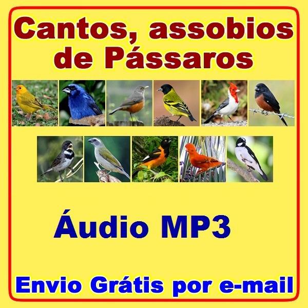 MP3 BELGA CANTO BAIXAR CANARIO DO