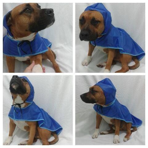 capa chuva cachorro