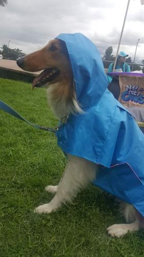 capa lluvia para perro o gato