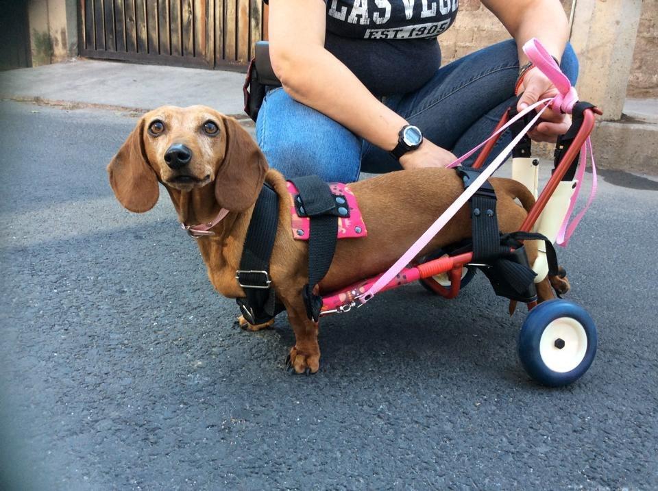 Car can silla de ruedas para perros arnes soporte trasero for Sillas para perros