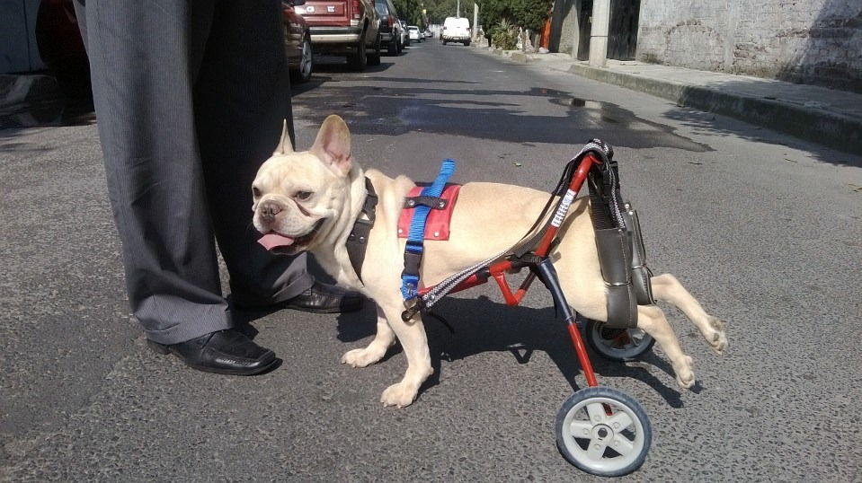 Car can silla de ruedas para perros discapacitados tam for Sillas para perros