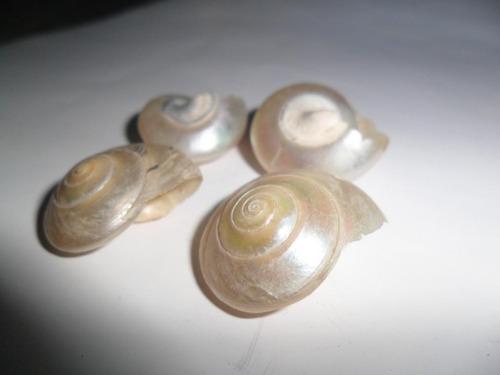 caracol caracoles caracolito nacar nacarado mar marino