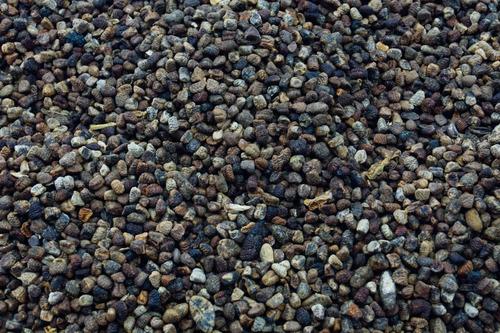 cardamomo semillas 100 gr