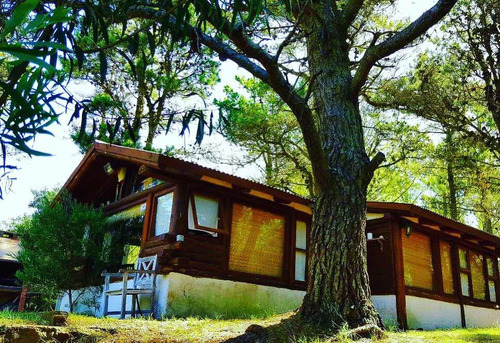 cariló hermosa cabaña 4 huéspedes