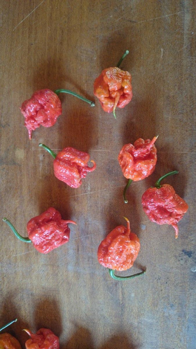 Carolina Reaper Hp22b - Molho De Pimenta 9 Unid frete Grátis