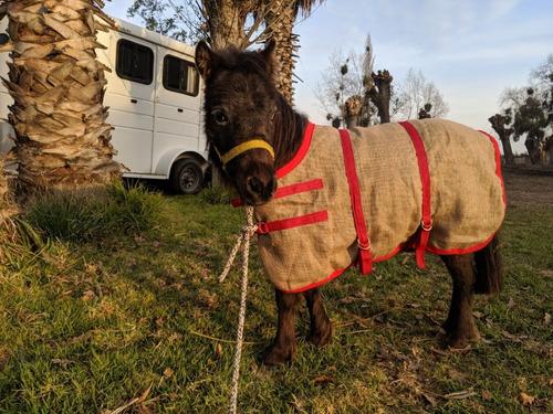carpa de arpillera para caballo