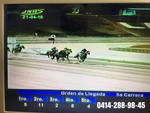 carreras de caballos en vivo,video hipico  track tv