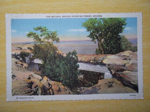 cartão postal antigo, floresta petrificada, arizona