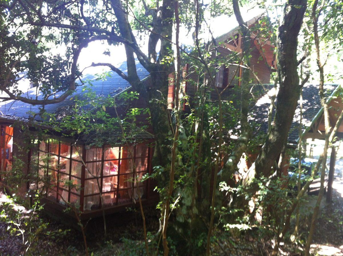 casa amplia en pucón, en medio de bosque nativo,