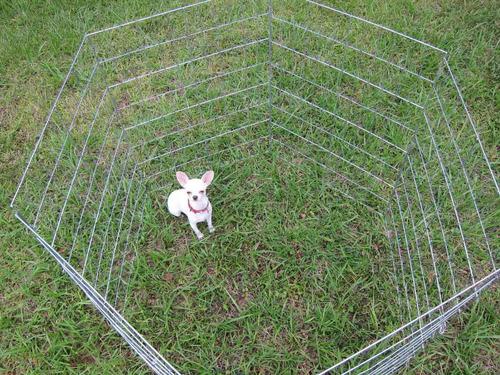 casa corral reja para perro 6 paneles 60x80cm altura