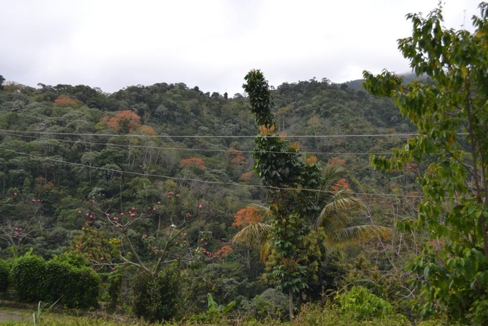 casa de campo en las montañas de san cristobal , los cacaos